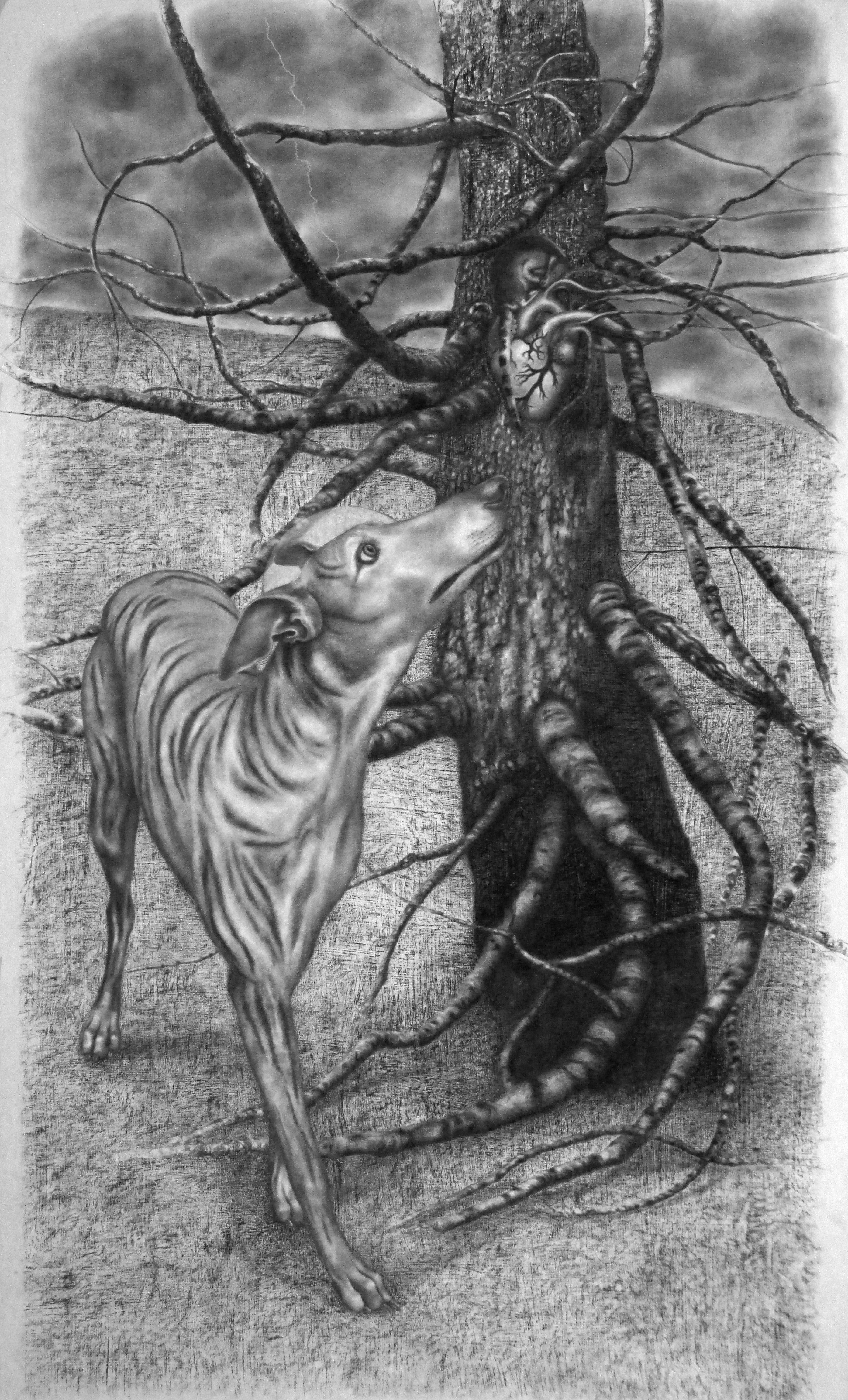 2015 - The Flicker and the Sentinel - (Cardiac Alert Dog - New Work of Dogs series) - charcoal on gessoes paper - 54 x 42